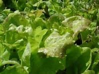 Blog_salad